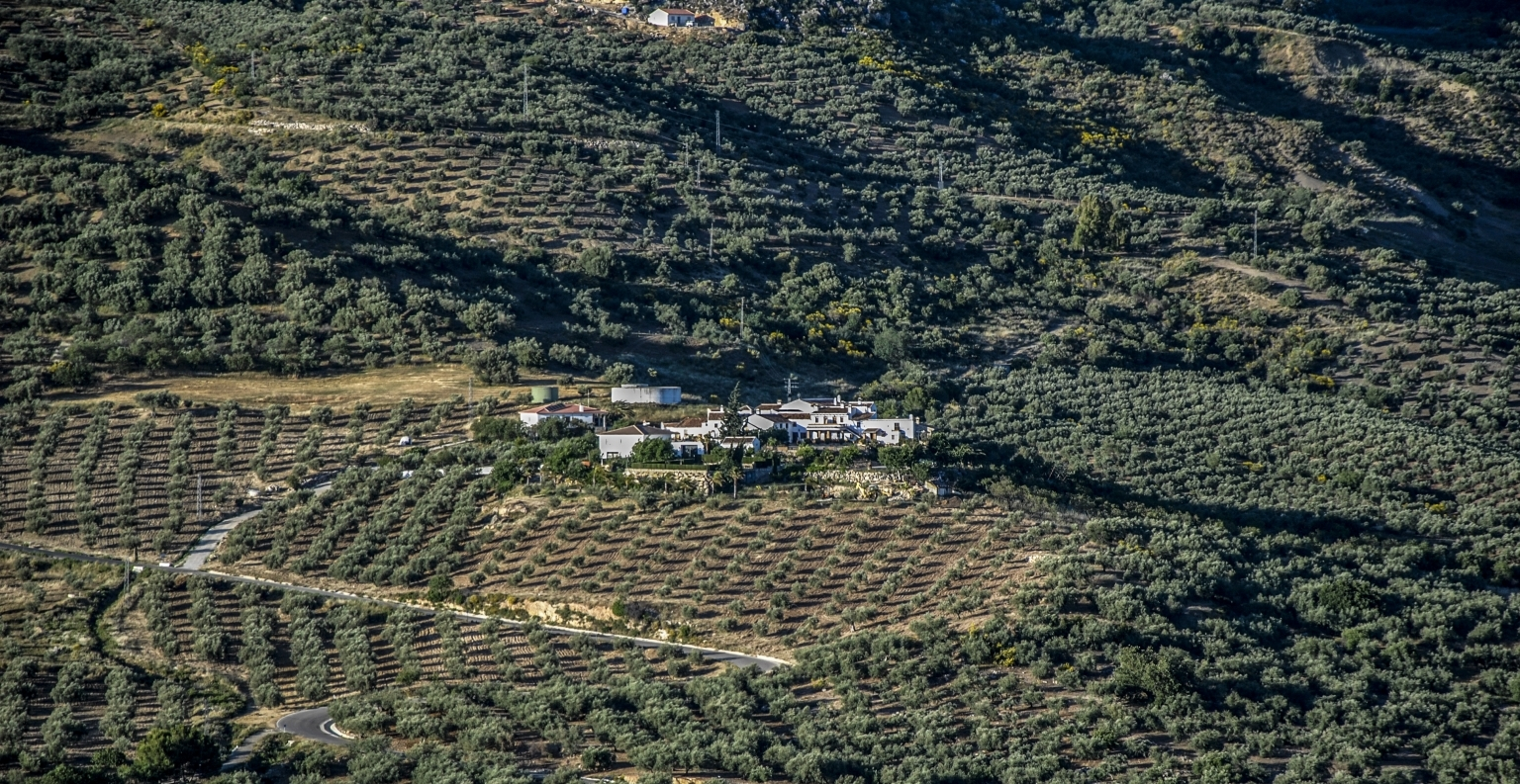 Olive oil Tourism